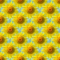 Seamless abstract springtime, summer natural background of blooming sunflowers