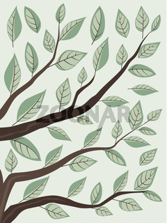 Branches and green leaves