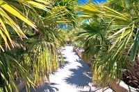 Palm tree jungle in Palmizana arboretum, Pakleni Otoci archipelago