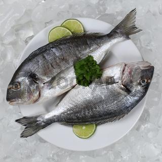 Zwei Dorade Fische auf einem Teller