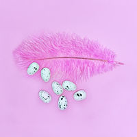 Eggs on a pink feather on a pink background. Easter concept.