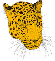 Sketch silhouette sketch leopard face on white background illustration
