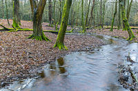 Forest stream in a mixed forest