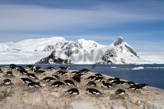 Adelie penguin colony on the rocks on the background of mountains