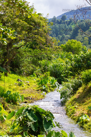 Costa Rica creek in the tropical jungle