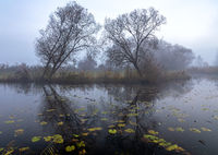 Morning fog at Paar river near Schrobenhausen, Bavaria, Germany in autumn