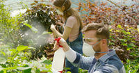Male and female professional gardeners spraying fertilizer on plants