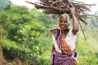 Old local woman carrying wood on her head along tea plantation of Ella, Sri Lanka
