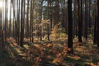 Small trees in the coniferous forest in autumn