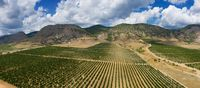 Aerial view of mountain vineyard in Crimea