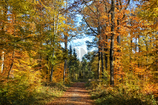 Naturpark Suedschwarzwald 3
