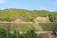 Wine-growing region