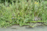 grass and wildflowers on a river shore in Nebraska Sandhills