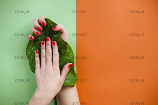 Crop woman with fresh leaf showing manicure