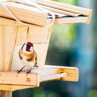 Goldfinch at a bird feeder house