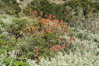 Typical vegetation on La Gomera