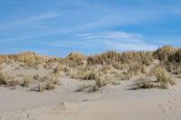 Düne auf Texel