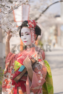 Maiko in kimono with kanzashi pins and holding a cherry branch in Kyoto's Gion district.