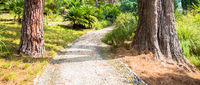 Peaceful pathway in botanical garden