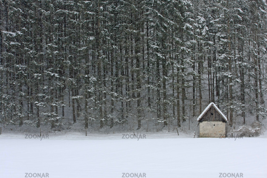 Lonesome hat in front of forest in winter