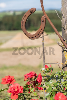 traditioneller Glücksbringer altes Hufeisen über blühenden Rosen