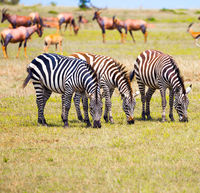 Magnificent trip to the African savannah