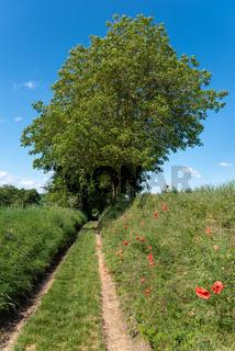 Landschaftsbild mit Feldweg bei Gochsheim