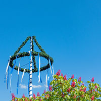 Maypole and blossoms of a chestnut tree isolated on blue sky