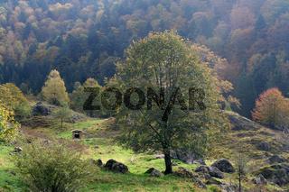 Schwarzwaldlandschaft im Herbst, Deutschland