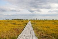 View of the wooden hiking trail in the swamp in autumn.