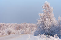 Winter road under snow. Frozen birch trees covered with hoarfrost and snow.
