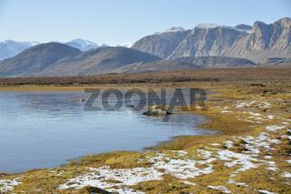 Gefrorener See in der Tundra, Sydkap, Scoresby Sund, Ostgrönland