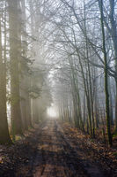 Road through a mysterious dark forest in fog