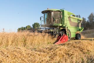 Ernte von Getreide mit Mähdrescher