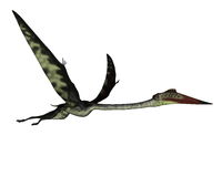 Quetzalcoatlus flying peacefully ahead - 3D render