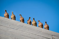 many pigeons sit on the roof of a building