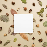 Empty memo paper with autumn dry leaves on khaki brown background. flat lay, top view, copy space