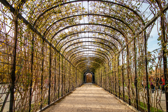 Perspective view of arched tunnel for climbing plants.