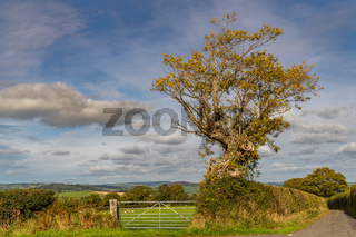 A tree and a cloud, Wales, UK