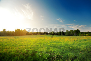 Summer landscape: yellow flowers hill and blue sky at sunset time