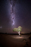 Illuminated tree under starry sky