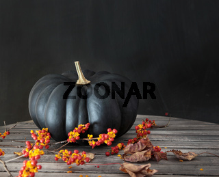 Black pumpkin with berries and leaves