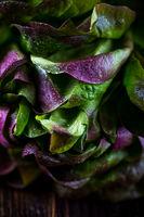 Organic Red Oakleaf lettuce