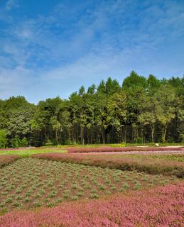 der Heidegarten in Schneverdingen,Lueneburger Heide,Niedersachsen,Deutschland