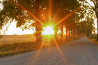 an alley along a dirt road in the sun, country road at sunset