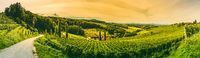 Winery panorama on the South Styrian Wine Road in Austria