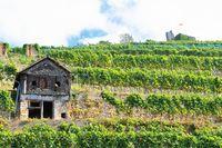 Staufen - below the castle ruin Staufen Germany