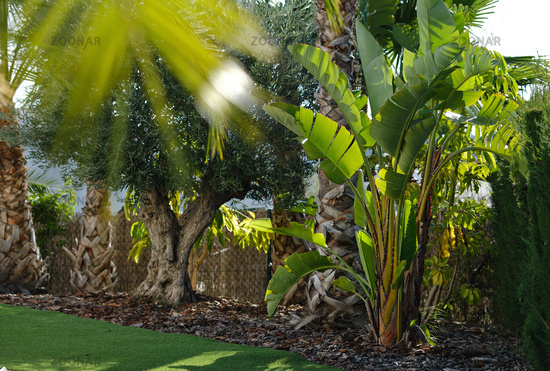 Lush tropical bushes and trees outdoor. Spain