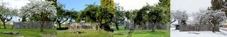 Apfelbaum in allen vier Jahreszeiten