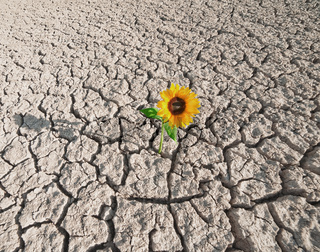 dry soil and growing plant